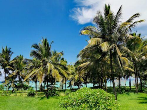 Ślub na Zanzibarze 3